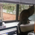 Cairo takes in the view from my new writing spot.
