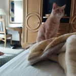 Finn loved exploring the hotel rooms on the way north.